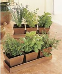 Potted Herb Plants Garden Kit