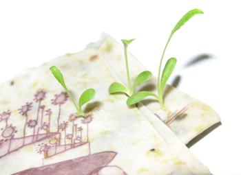 Grow-A-Note seed embedded plantable paper by Green Field Paper Company